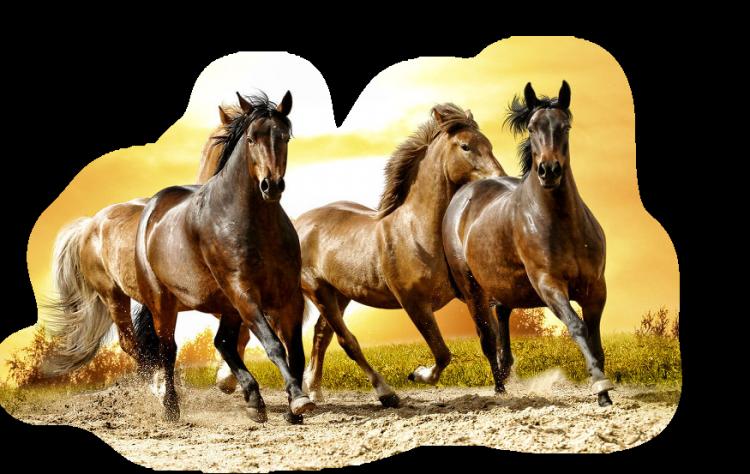 Vigyázzunk lovainkra